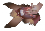 carcass_nodes_retropharyngeal2